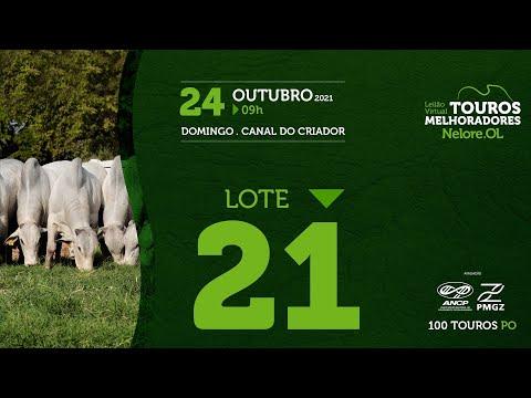 LOTE 21 - LEILÃO VIRTUAL DE TOUROS MELHORADORES  - NELORE OL - PO 2021