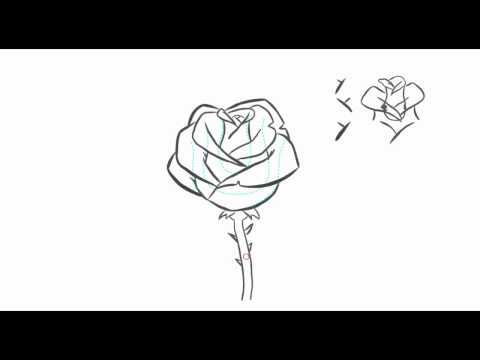 วิธีการวาด ดอกกุหลาบ1