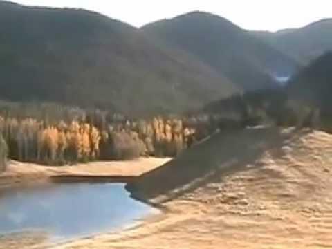 Bull Elk in Forbes Park Colorado Video