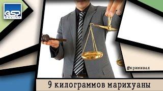 Бесплатное обучение юристов | 23 января'15