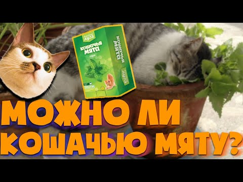 Вопрос: Может ли кошачья мята навредить кошке?