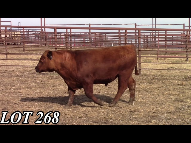Mead Angus Farms Lot 268