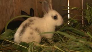 Фермер из Грязовецкого района раскрыл свою формулу успешного кролиководства