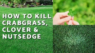 How to Kill Crabgrass, Nutsedge & Clover in the Lawn // Weed Control Like a Pro