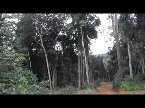 Yenzi Summer Camp - Gabon