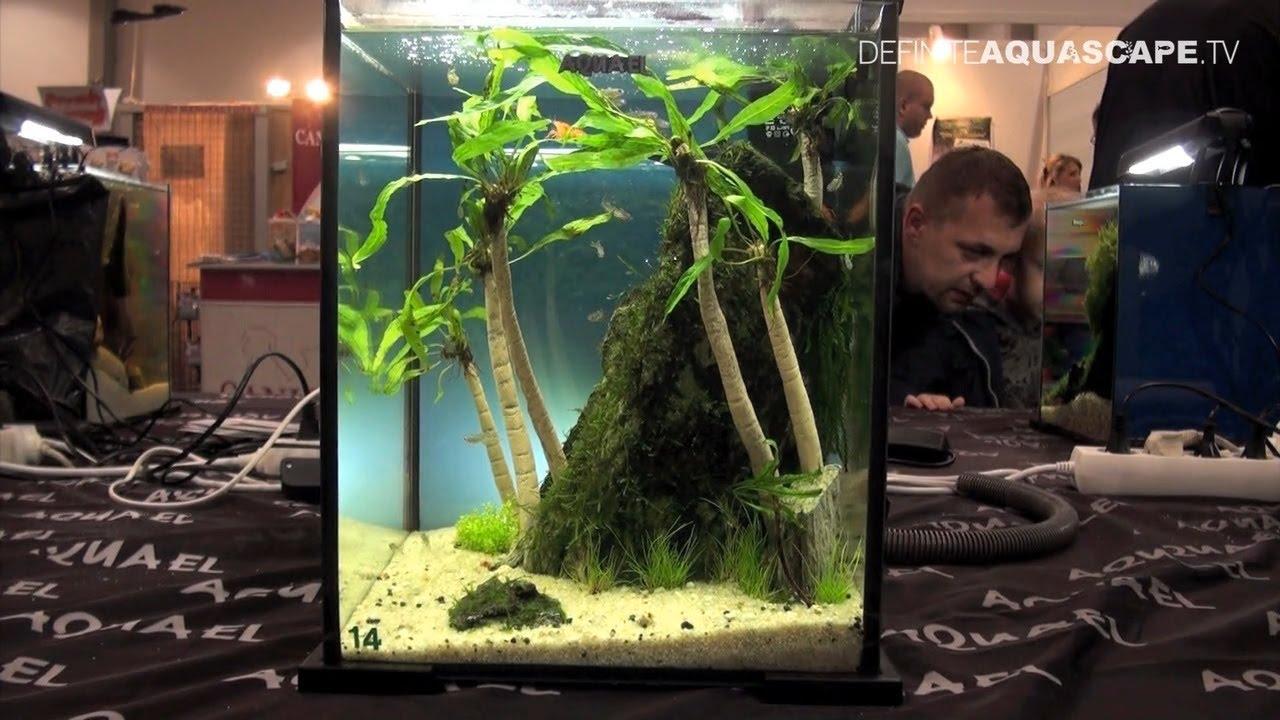 Aquascaping - Aquarium Ideas from PetFair 2013, Lodz, Poland, pt.3 ...