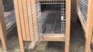 Easy Kennel: Raised Dog Kennel Design