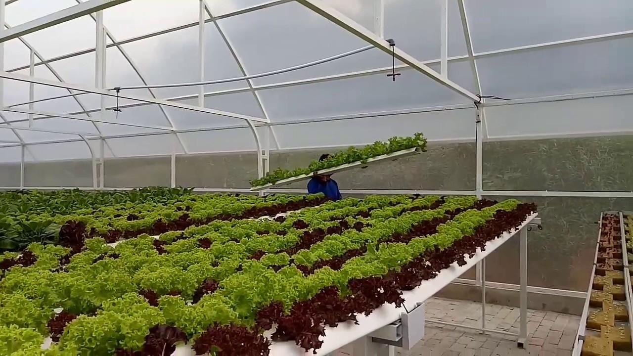 Green House Hidroponik Di Balikpapan Gifta Garden