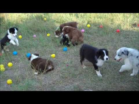 Ballapalooza with the Aussie Puppies!