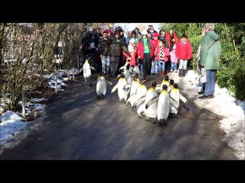 Penguin Parade, Zurich Zoo, Switzerland