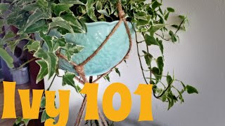 Ivy 101 | Care and Propogation