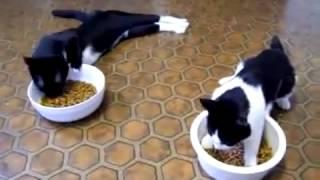 Смешные кошки. (Funny Cat)