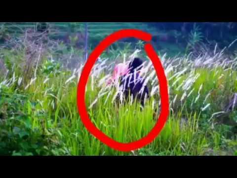 Bokeh Video Full Semak