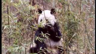 Tierbabies aus aller Welt - Life in a new World - Animals and Wildlife (Teil 2)