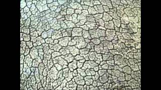 Rhino Skin - Tom Petty and The Heartbreakers