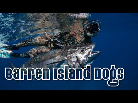 Barren Island Dogs - Spearfishing Dogtooth In Madagascar