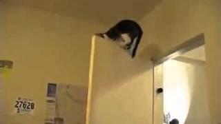ловкий кот
