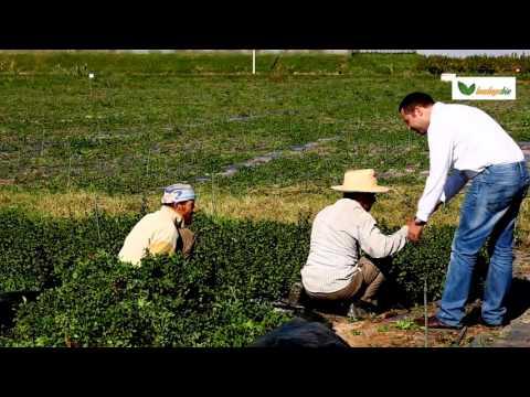 Loudaya Bio - Organic Farming