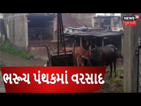 Gujarat rains: Heavy rainfall in Bharuch, Farmers happy  18 Gujarati
