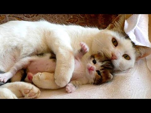 Mama Cat Takes Care Baby Kitten Compilation