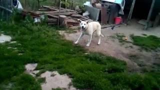 Пацана съела собака