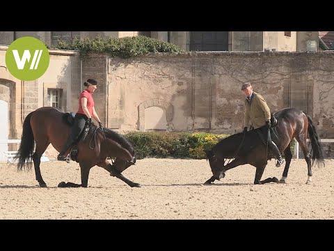 Chantilly : les plus belles écuries du monde - Mes grandes écuries