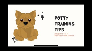 Puppy Talk: How to Potty Train a Cairn Terrier Puppy
