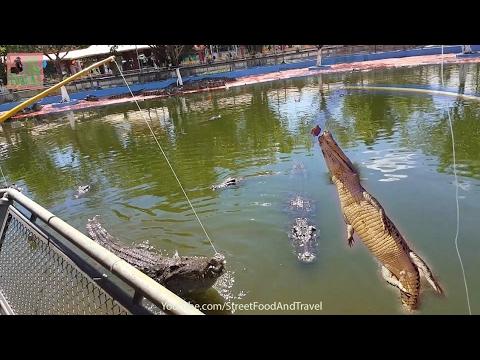 Vietnam Travel 2017 - Fishing Crocodile - SUOI TIEN THEME PARK