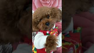 Look at these cute and funny puppies dogs 3167