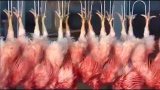 ¿De qué está hecho el pollo cronch, palomitas de pollo y nugets? sigue comprando a gringos