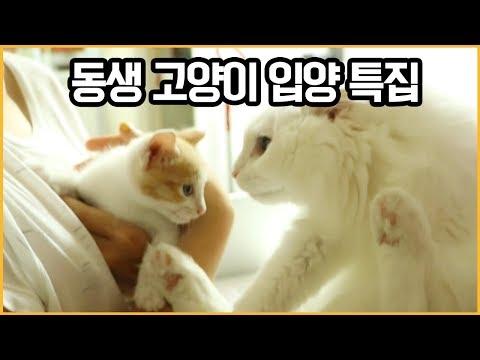 꽁지네 집에 둘째 고양이가?! 고양이 입양 첫 날! 박사와의 첫만남 /cat diary /KKONGJI