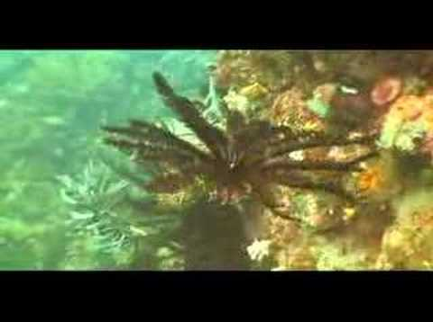 an introduction to the life of a brittle starfish The basics: how to tell sea stars (asteroids) from brittle stars (ophiuroids) (starfish, sea stars) is open as its directed towards a substantially different way of life.