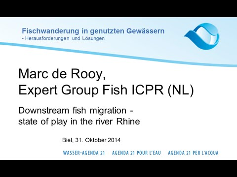 Marc de Rooy: Downstream fish migration -state of play in the river Rhine