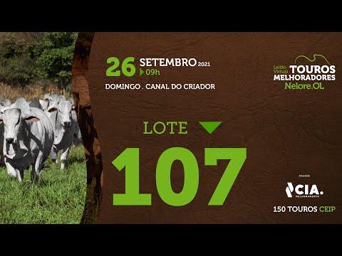 LOTE 107 - LEILÃO VIRTUAL DE TOUROS 2021 NELORE OL - CEIP