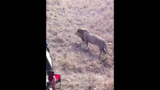 Сафари, Танзания,Mikumi