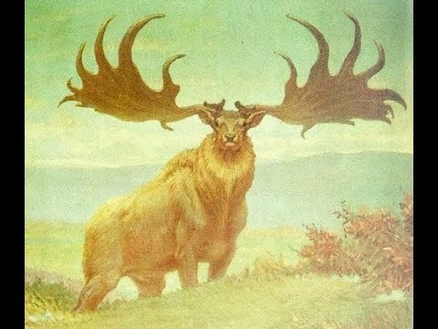 World's Biggest Animal-The Irish Deer 4 million years ago up to 20 feet tall- length of 17 feet- from YouTube · Duration:  2 minutes 30 seconds
