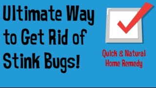 How to Get Rid of Stink Bugs in the House | Getting Rid of Stink Bugs Quick