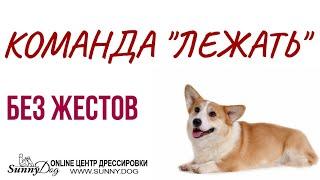 """Как научить собаку команде """"Лежать"""" без жестов? Учим команду лежать по видео обучению"""