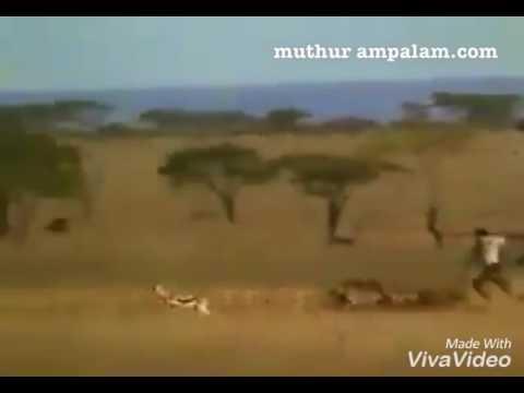 Muthur ampalam.com