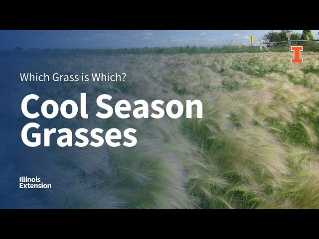 Cool-Season Grasses: Which Grass is Which?