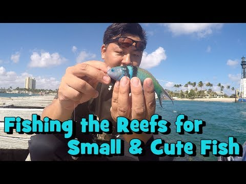 Reef Multi-Species Fishing is Like a Box of Chocolates... (Pompano Beach, FL)
