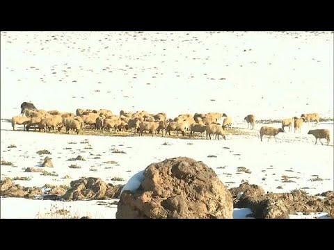 تساقط كثيف للثلوج في عدة مناطق بالمغرب  - نشر قبل 16 دقيقة