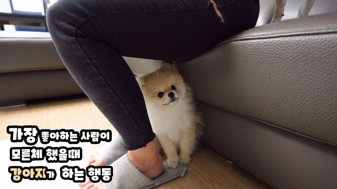 Download 주인이 모른체 하자 강아지가 하는 행동