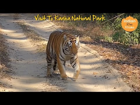 Visit To Kanha National Park | Royal Bengal Tiger | Tiger Kanha National Forest M.P. INDIA