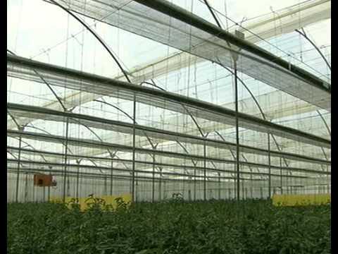 Construccion paso a paso de un invernadero doovi for Vivero estructura