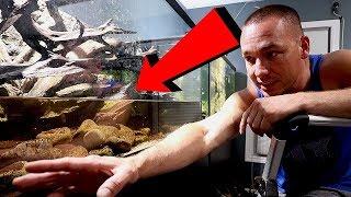 THE NEW aquarium scape for the UARU CICHLID fish tank!