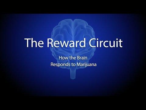The Reward Circuit: How the Brain Responds to Marijuana