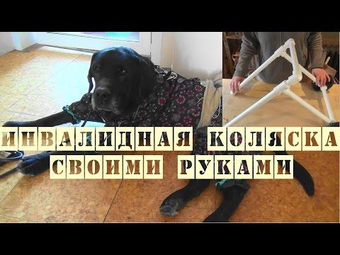 Инвалидная коляска для собаки и кошки своими руками