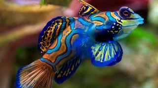 Top 20 World's Most Beautiful Fish In The Ocean