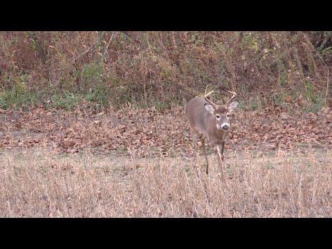 Use Sex, Food and Security for Better Deer Hunting - Deer & Deer Hunting TV, Full Episode